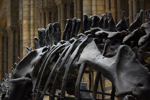 An image of bones.