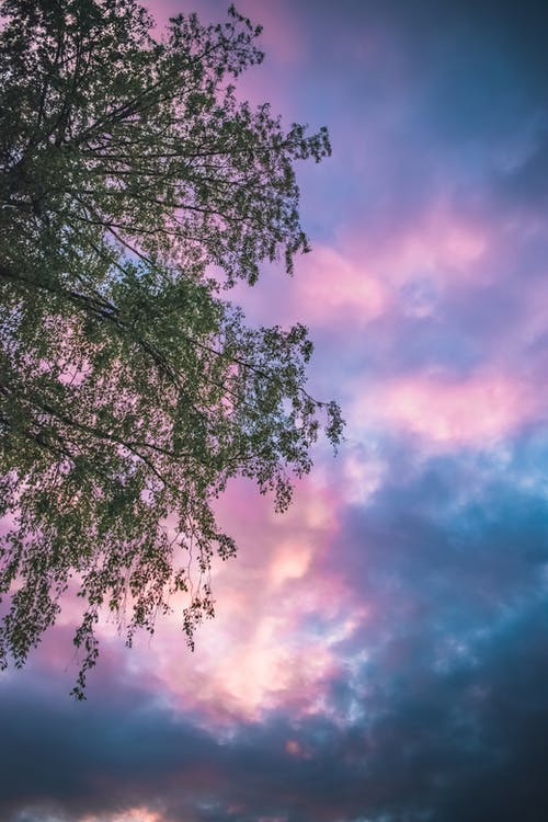 Безкоштовне стокове фото на тему «відділення, дерево, колір, листя»