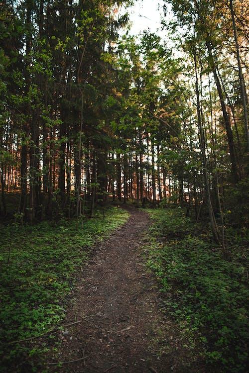 běžecká dráha, chodník, denní světlo