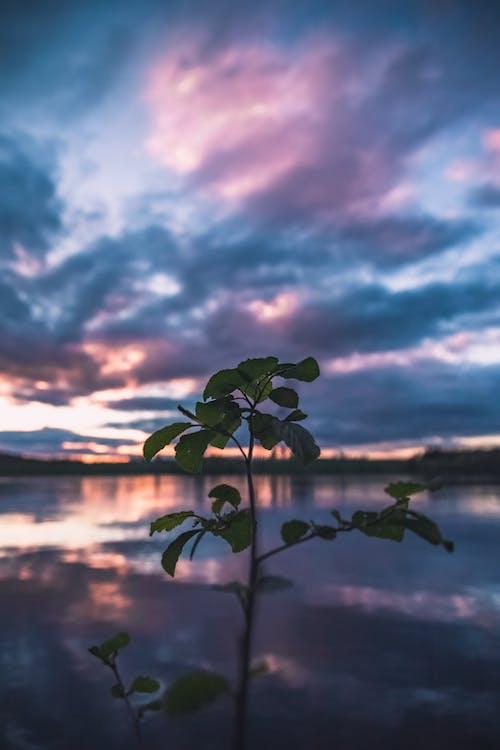 Foto d'estoc gratuïta de alba, cel ennuvolat, cel espectacular, enfocament poc profund