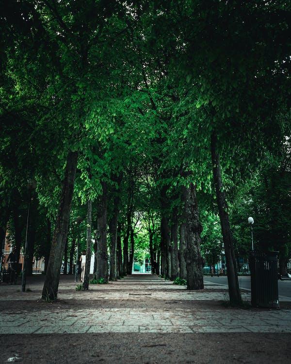 cesta, chodník, lehký