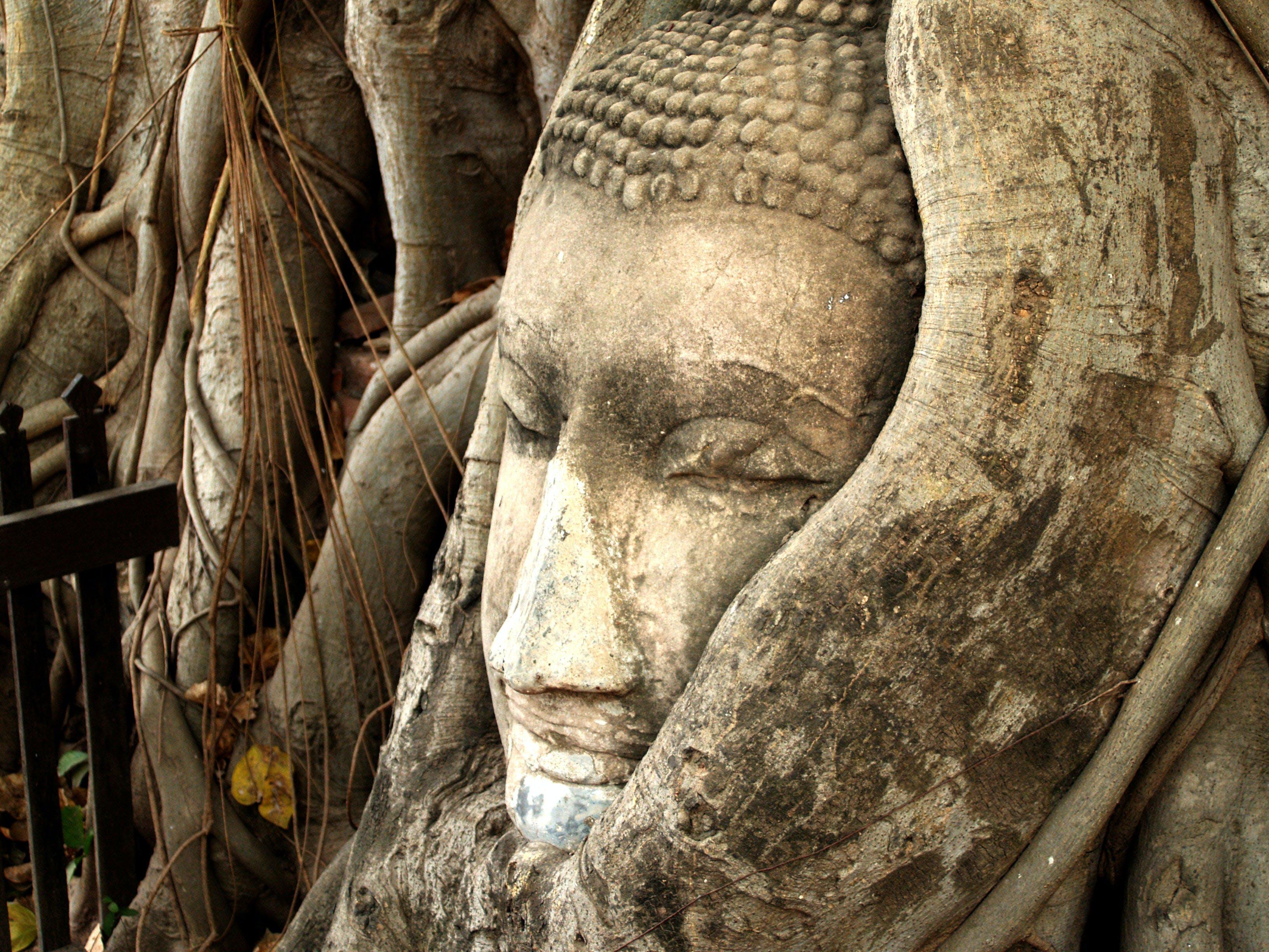 Kostenloses Stock Foto zu kunst, wahrzeichen, statue, zaun