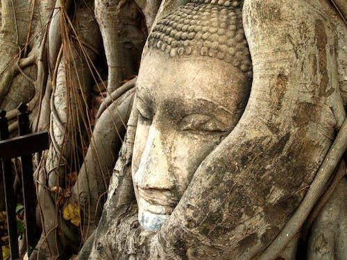 Darmowe zdjęcie z galerii z azjatycki, budda, buddyjski, buddyzm