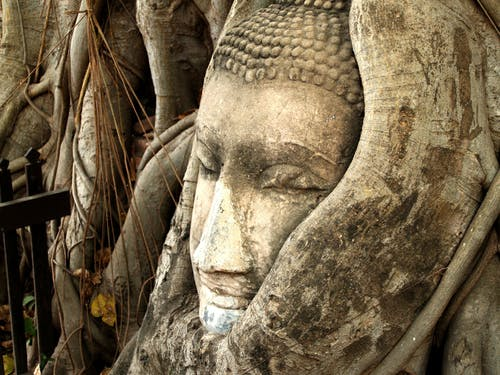 Foto stok gratis Agama Buddha, akar, Asia, beken