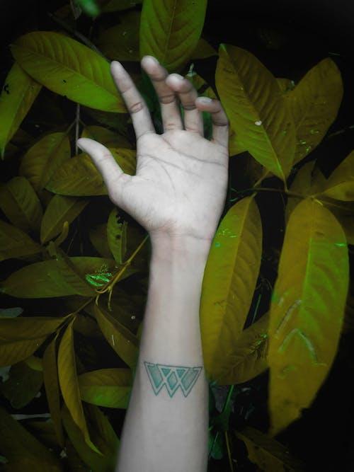 Безкоштовне стокове фото на тему «листя, рука, тату»