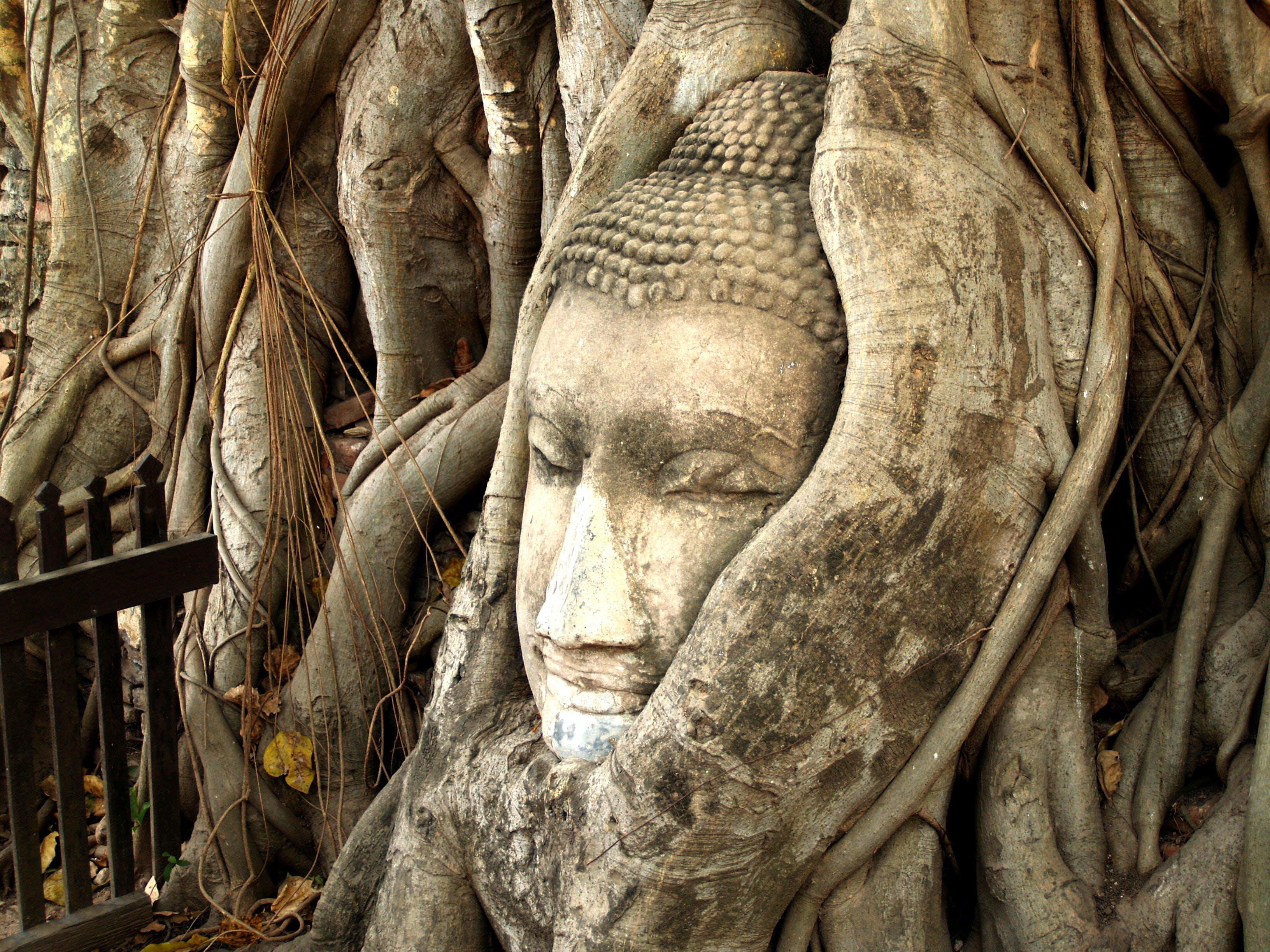 Gautama Buddha Bust in Tree
