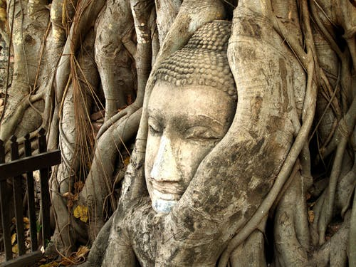 Gautama Buddha Bust in Tree