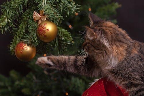 Foto d'estoc gratuïta de any nou, arbre, arbre de Nadal, bola