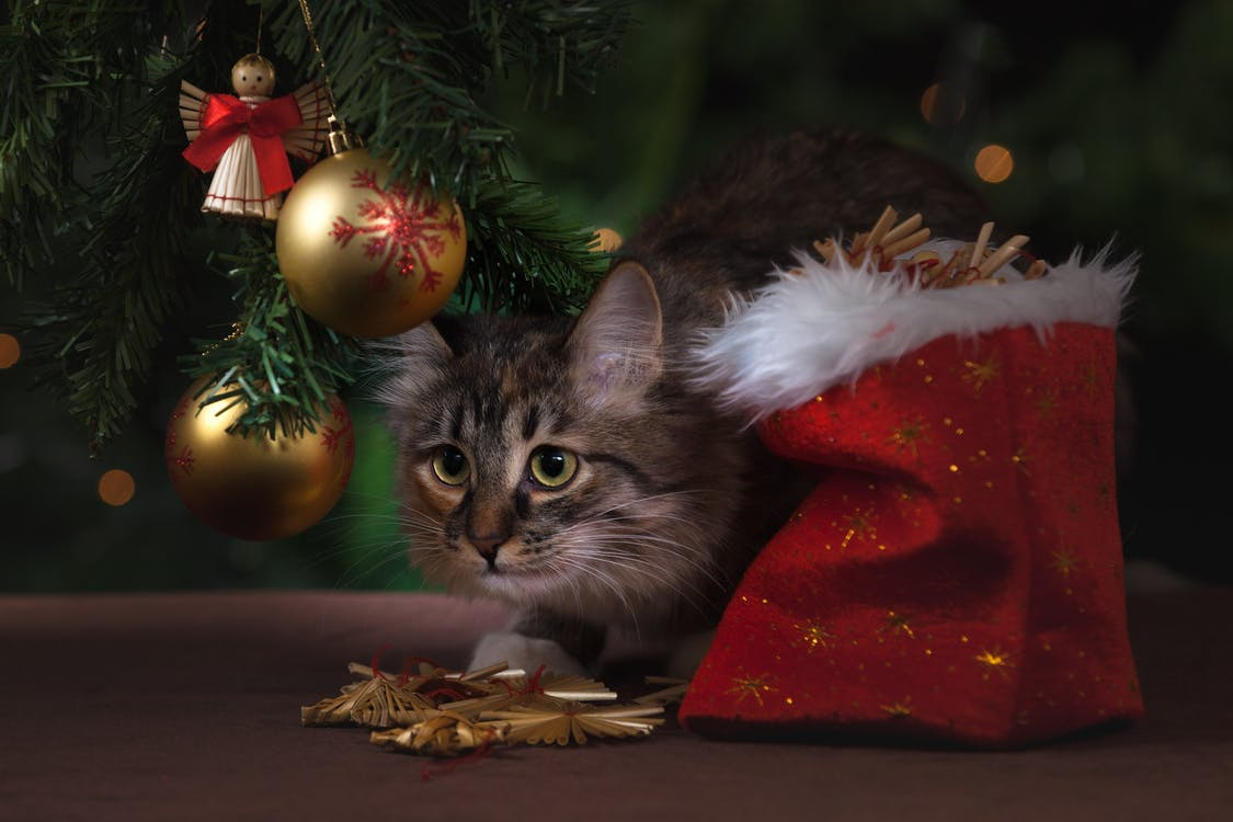 Brown Tabby Cat Beside Christmas Tree