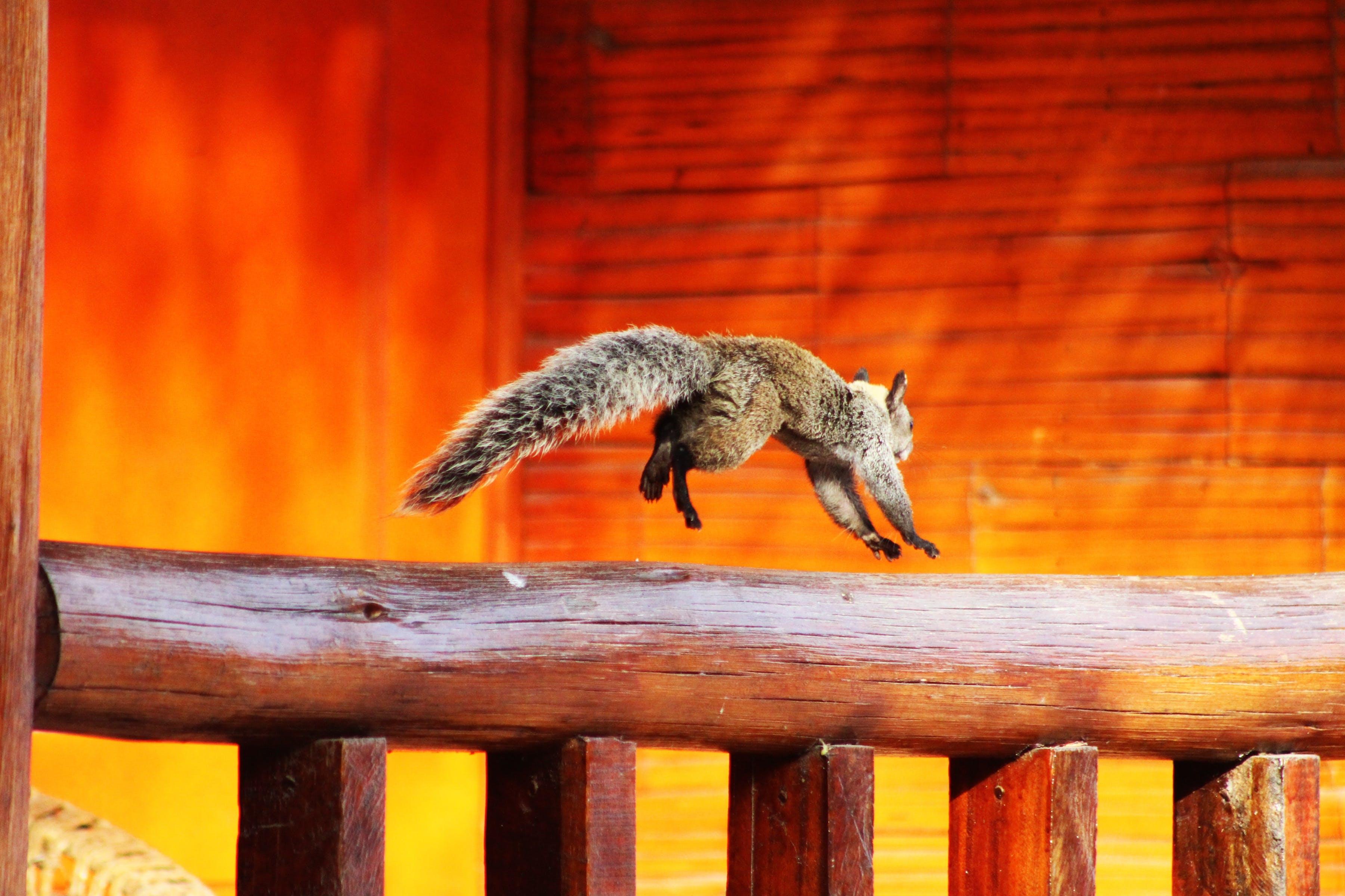 Kostenloses Stock Foto zu bewegung, eichhörnchen, fokus, holz