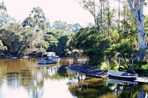 Kostnadsfri bild av båtar, eukalyptusträd, flod, fredlig