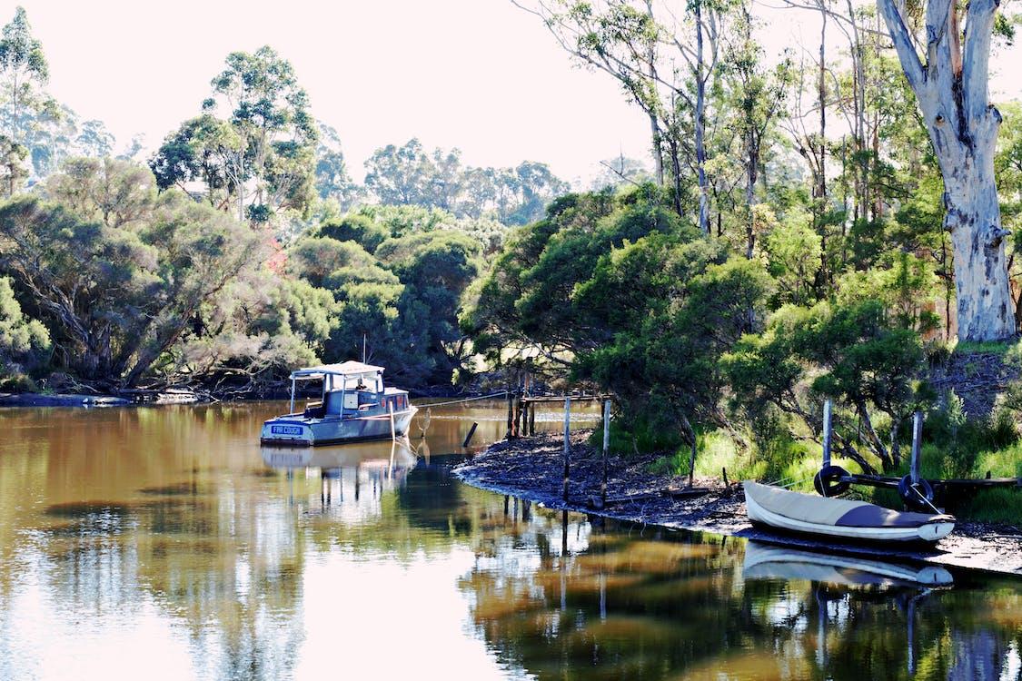 både, eucalyptus træer, flod