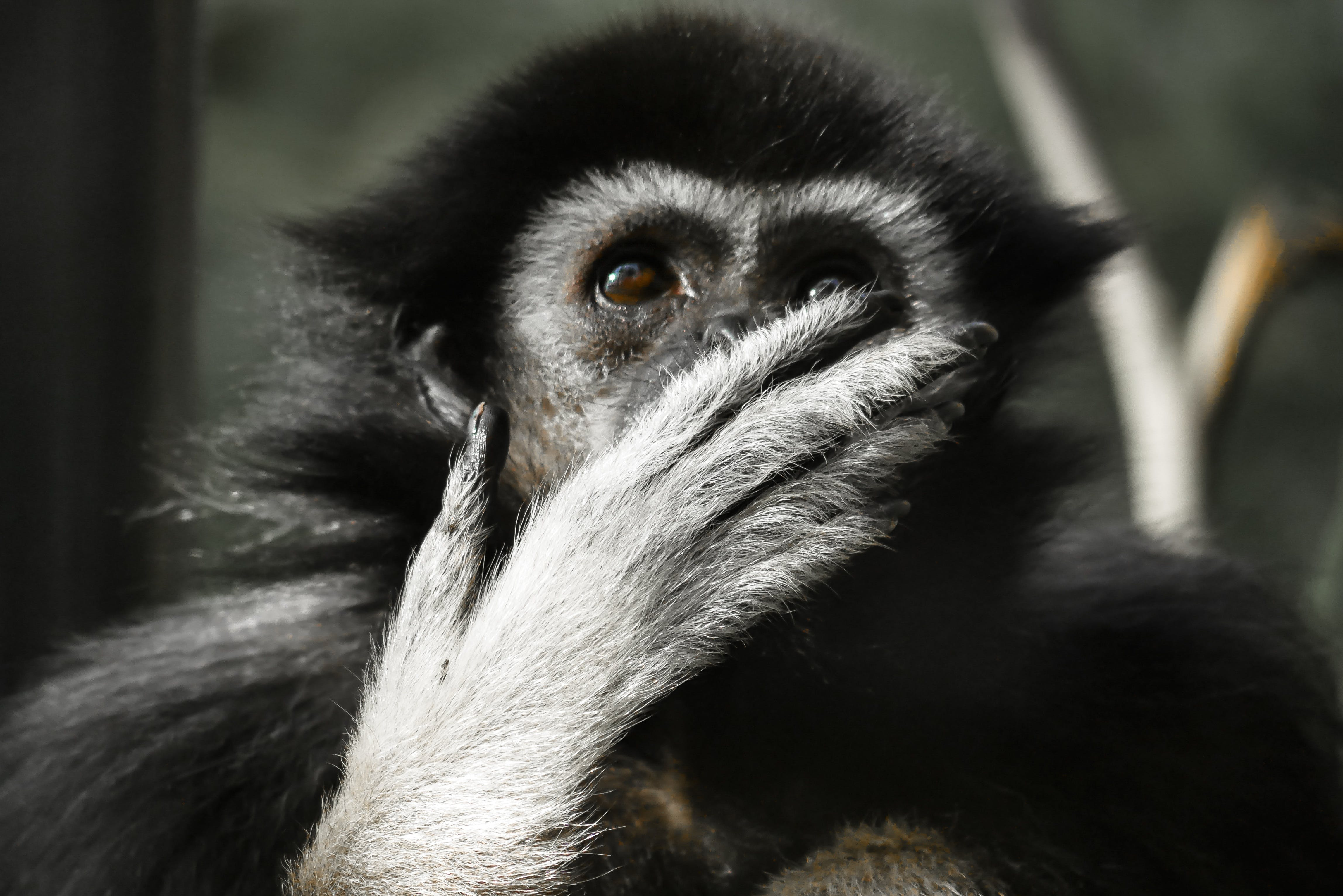 Photo of Black and Gray Primate