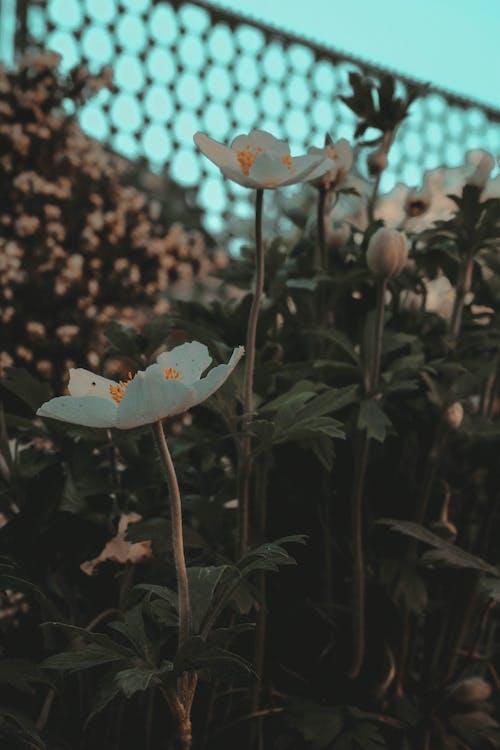 Free stock photo of blue sky, flower, flower garden