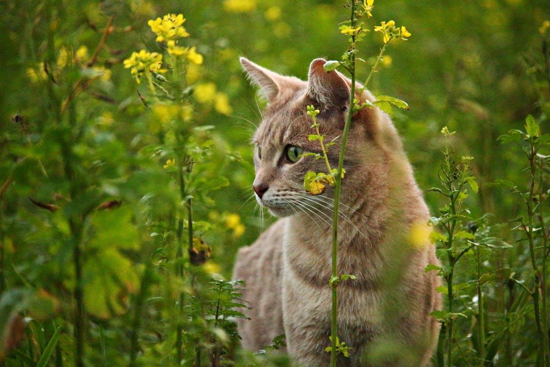 Orange Tabby Cat Beside Yellow Rapeseed Flowers