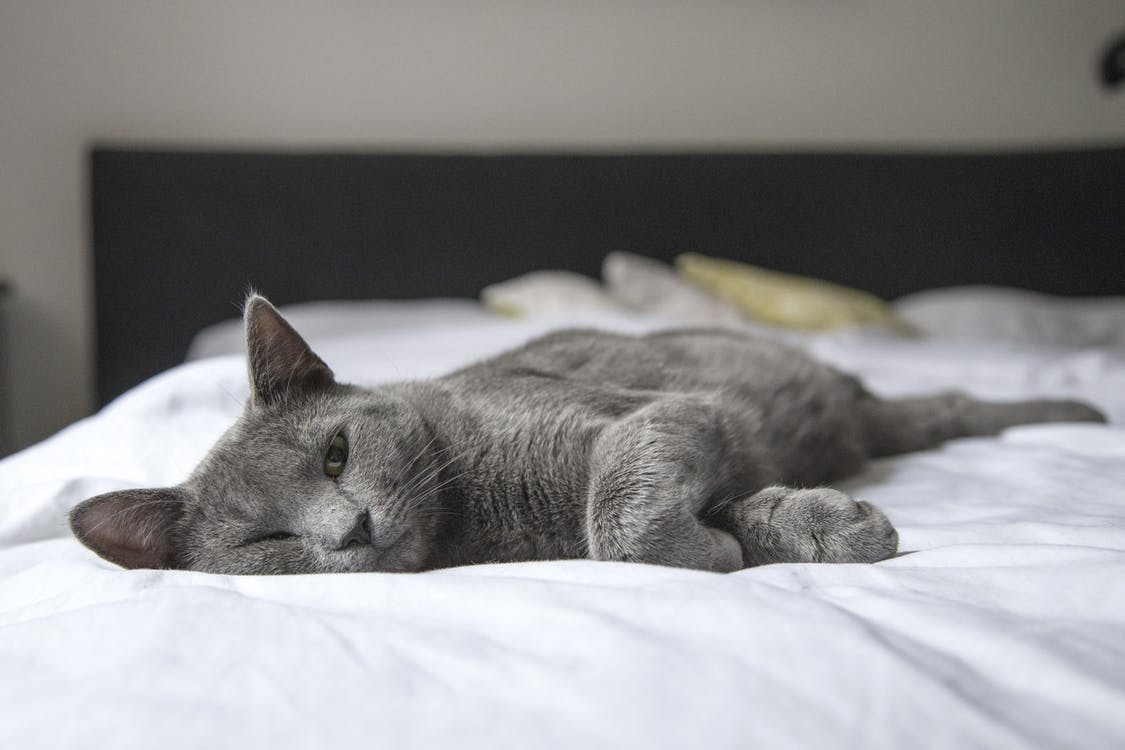 Gray Cat Lying on Bed