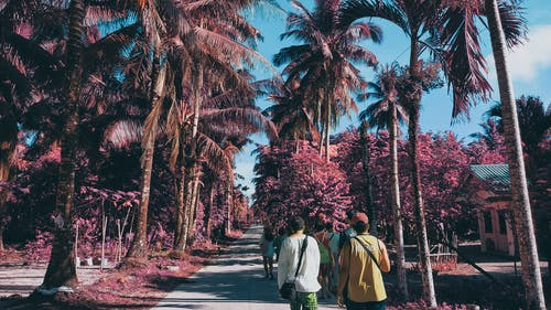 섬, 야자수, 여름, 적외선의 무료 스톡 사진