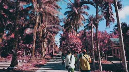 Základová fotografie zdarma na téma dovolená, infračervený, léto, ostrov