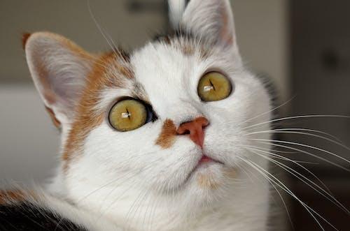 かわいらしい, ぶち, ぼかし, キティの無料の写真素材