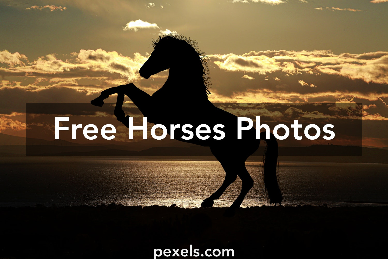 250 Beautiful Religious Photos Pexels Free Stock Photos: 250+ Beautiful Horses Photos Pexels · Free Stock Photos