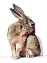 animal, cute, rabbit