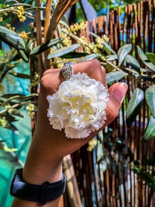 Základová fotografie zdarma na téma 4k tapeta, bílá, dřevo, hodiny