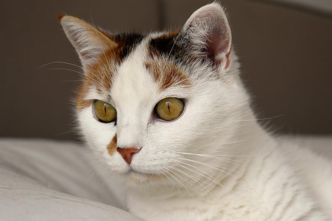 가정의, 고양이, 고양잇과 동물