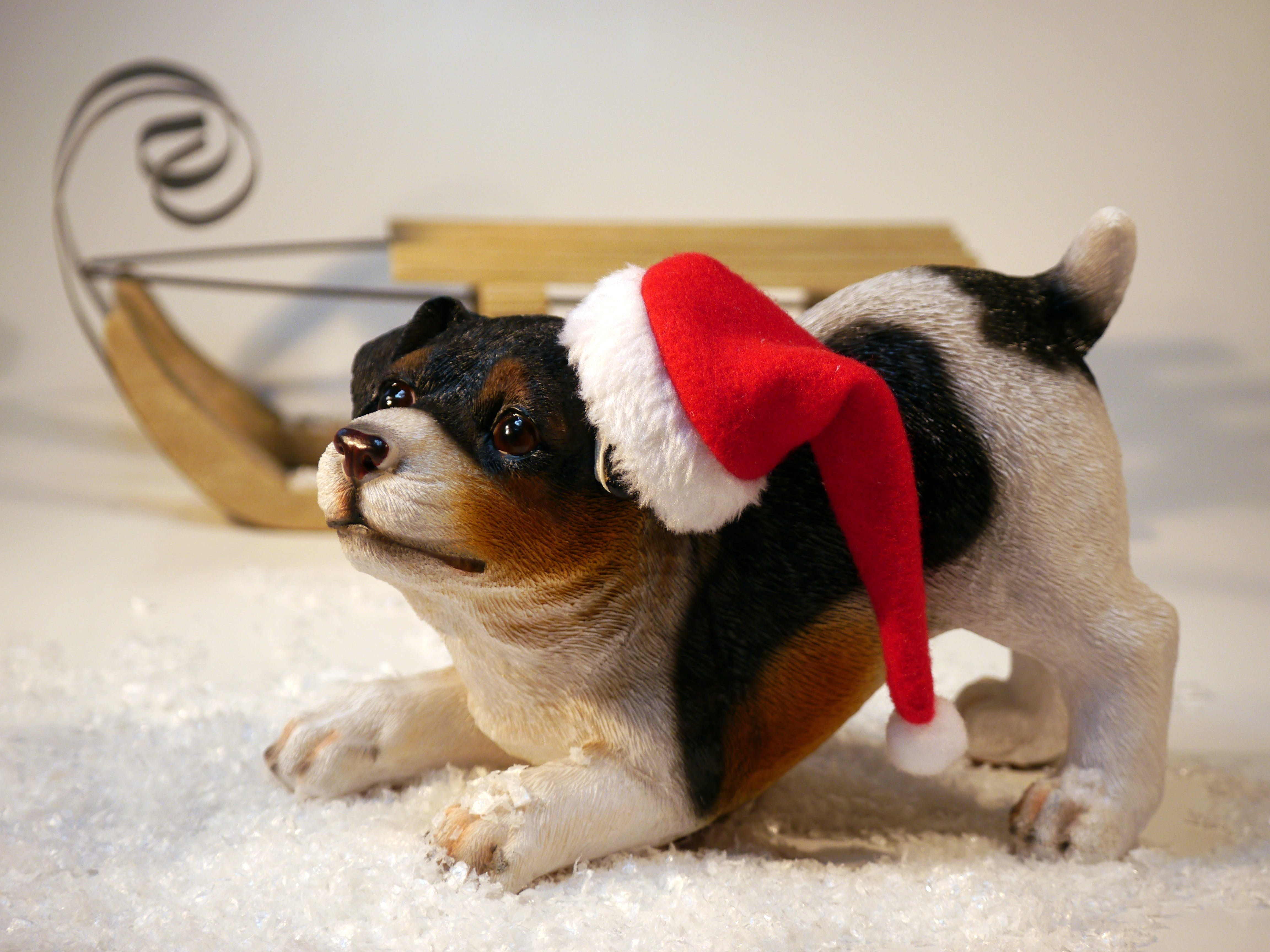 Dog Wearing Santa Hat Figurine