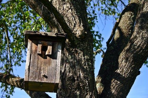 Gratis lagerfoto af fuglehus, gren, kævle, rede