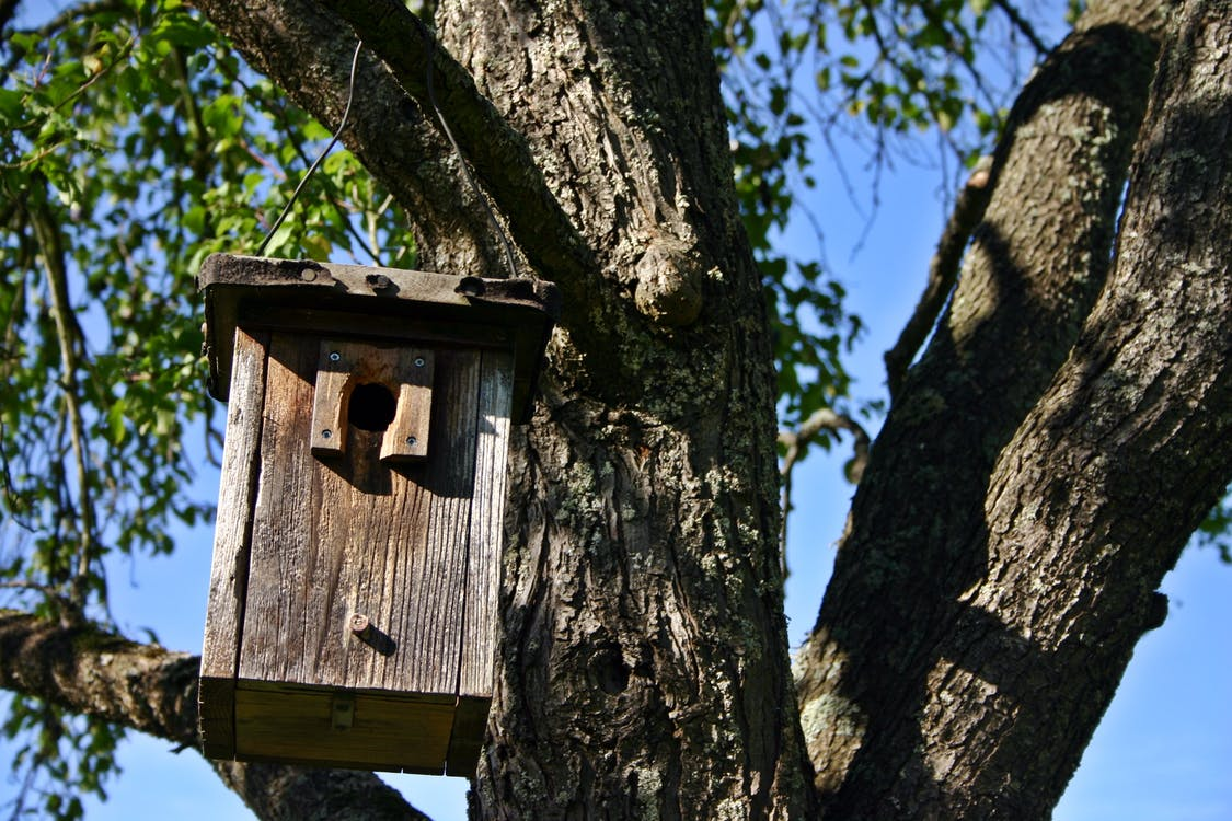 Brown Wooden Box Hanging on Tree