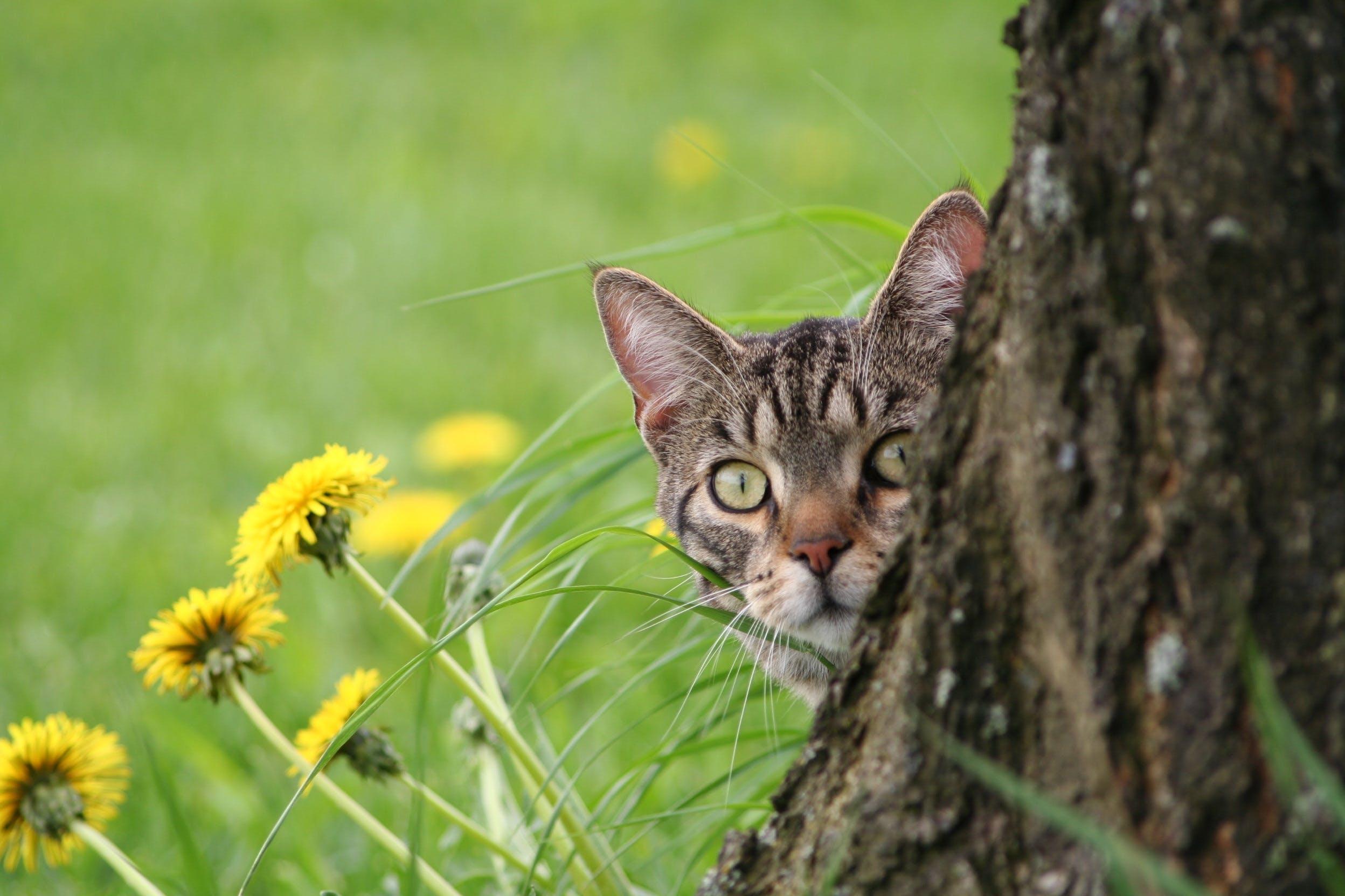 Brown Tabby Cat Hiding in Tree