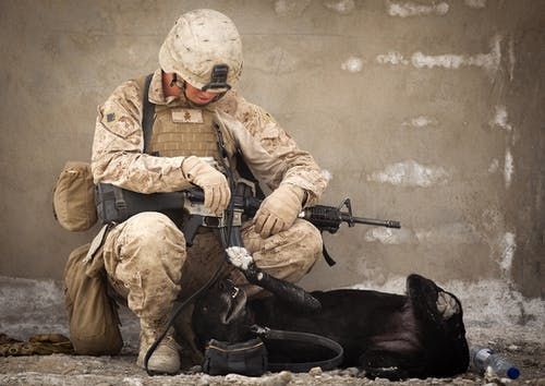 Foto d'estoc gratuïta de animal, arma, batalla, caní