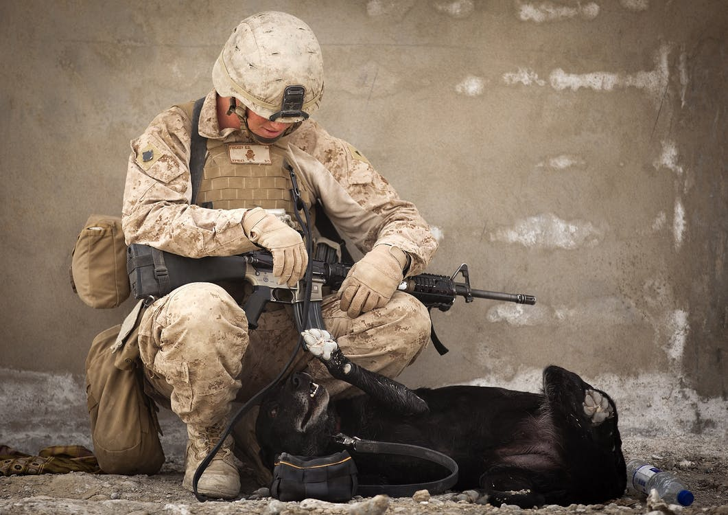 Soldier Sitting on Rock While Playing With Black Dog