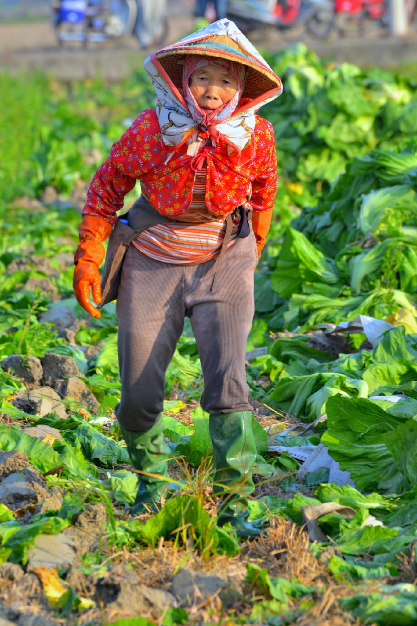Free stock photo of woman, field, agriculture, old