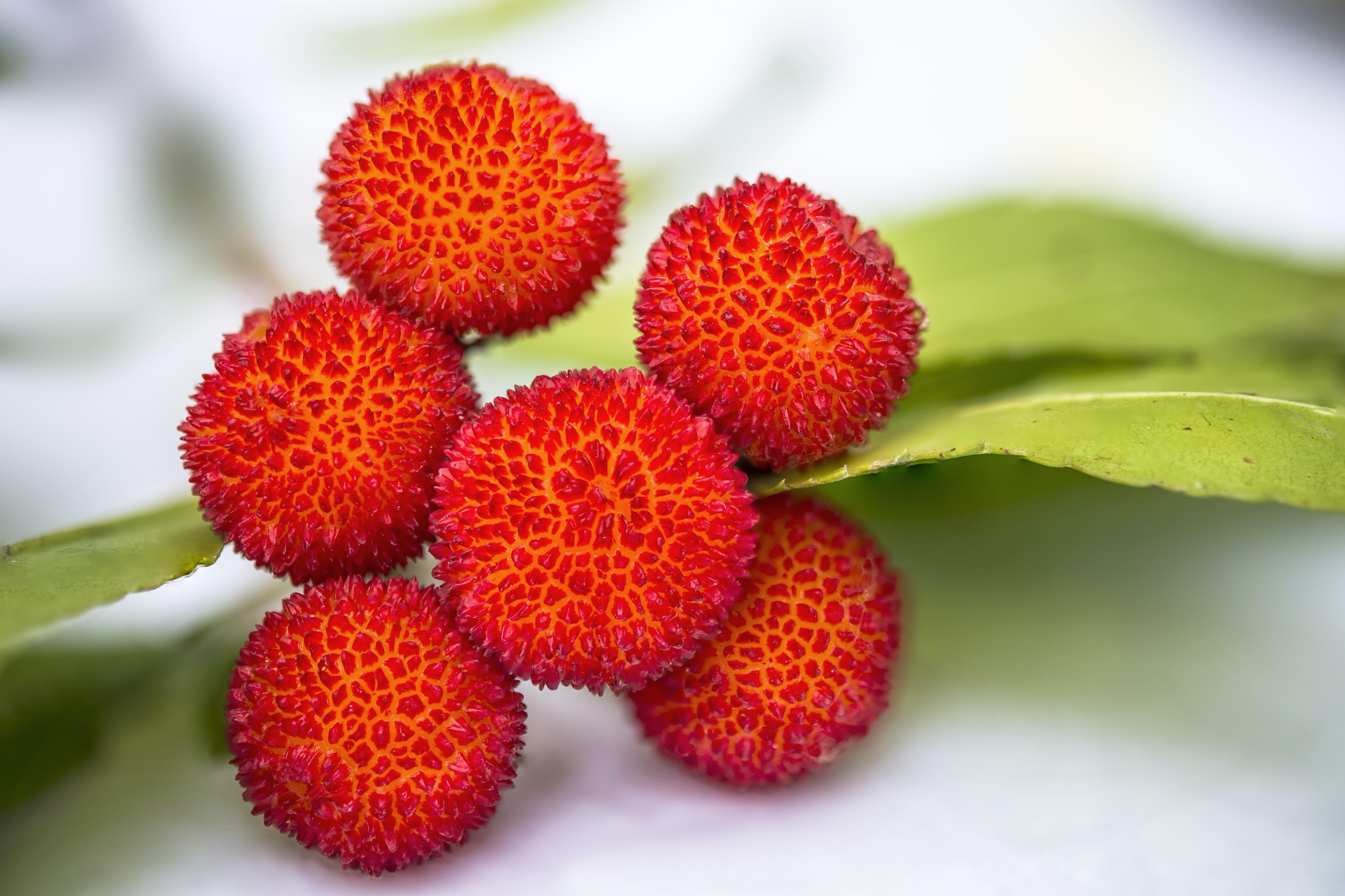 Free stock photo of arbutus, arbutus unedo, edible, fruit