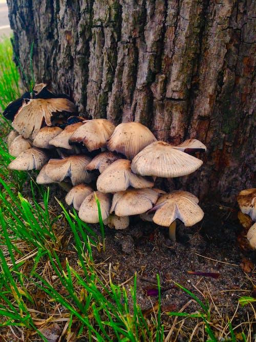 Immagine gratuita di alberi, albero, albero base, funghi