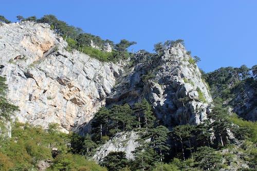 Free stock photo of bosnia and herzegovina, national park sutjeska