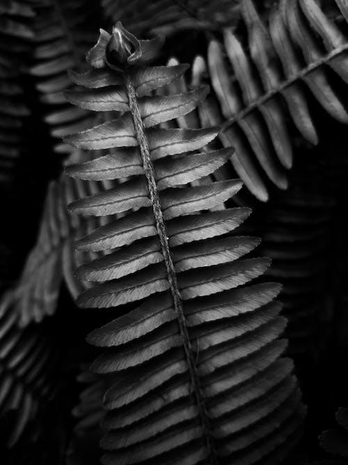 Kostenloses Stock Foto zu launisch, minimal, pflanze