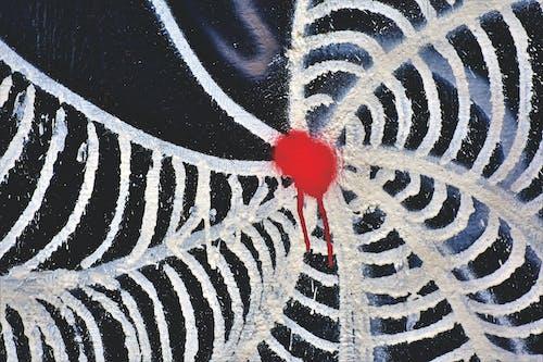 คลังภาพถ่ายฟรี ของ กราฟฟิตี, เครื่องพ่นสารเคมี, ใยแมงมุม