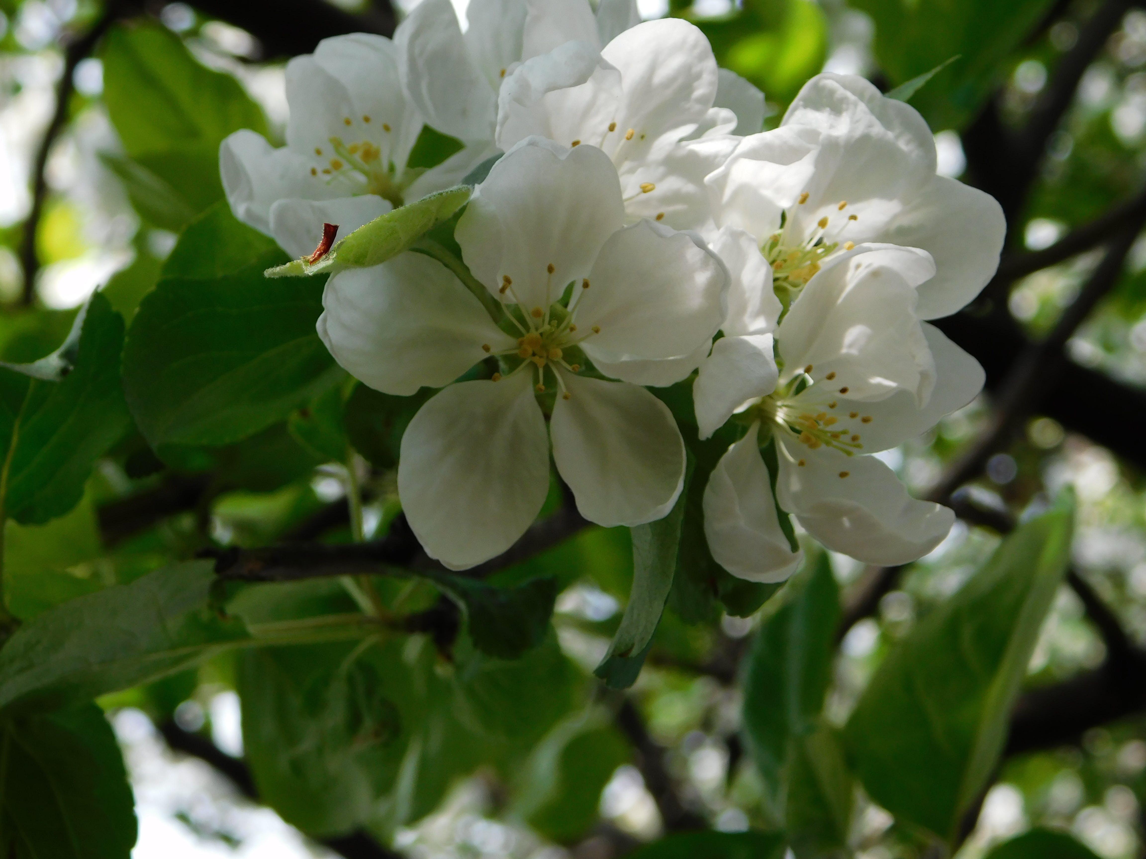 花の壁紙の無料の写真素材