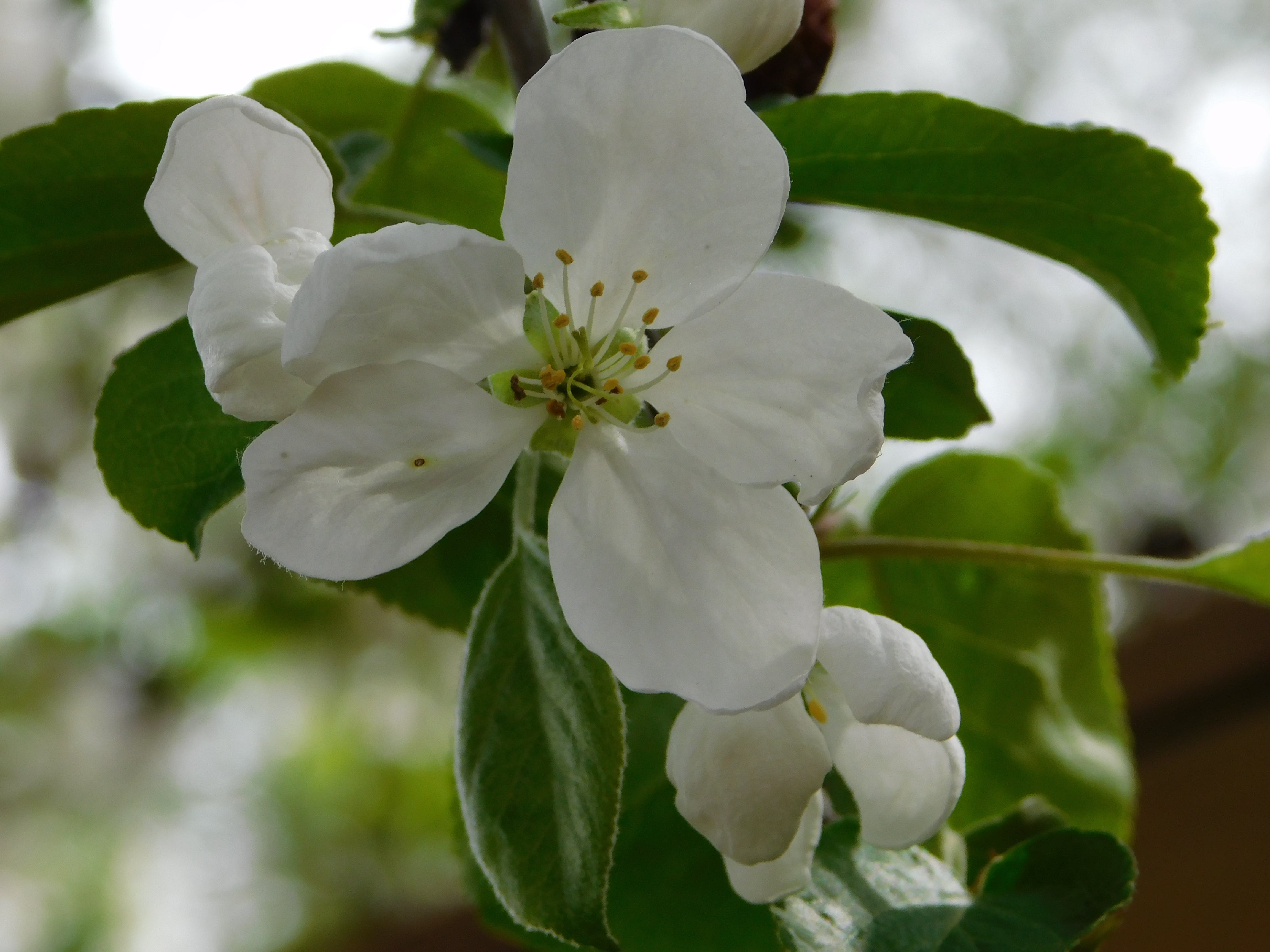 春の壁紙の無料の写真素材