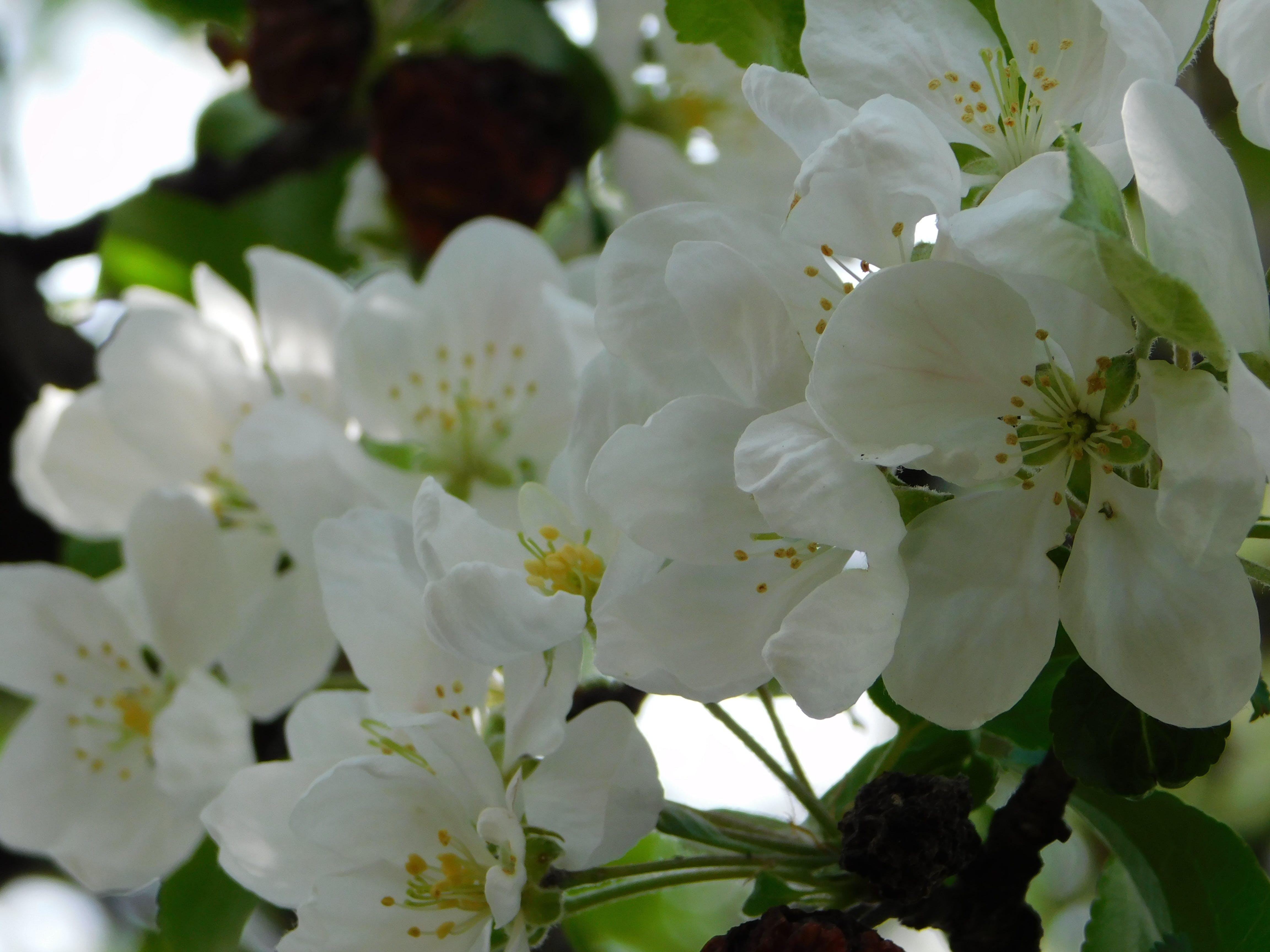 花いっぱいの壁紙の無料の写真素材