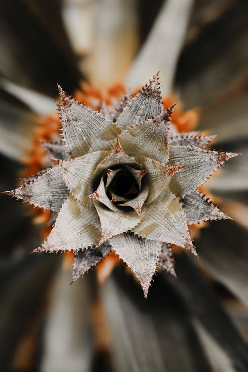 Selective Focus Photography of Orange and Brown Pineapple Plant