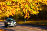road, nature, sunny
