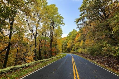Imagine de stoc gratuită din arbori, asfalt, bandă, cădere