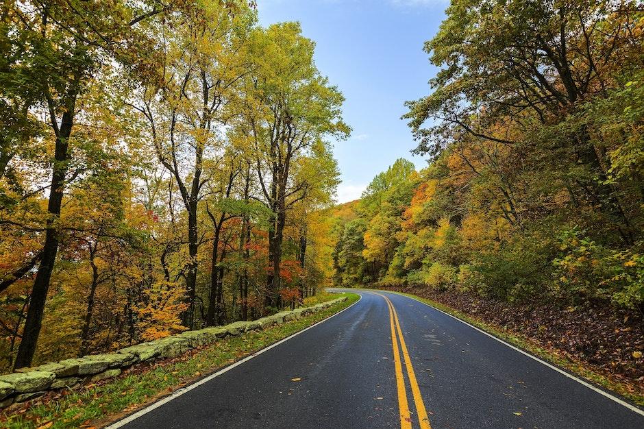 asphalt, autumn, beauty