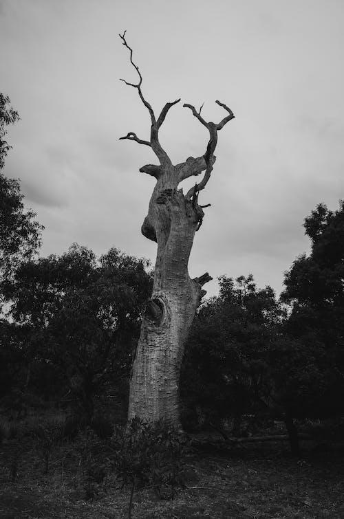 낮, 모노톤의, 야외, 자연의 무료 스톡 사진