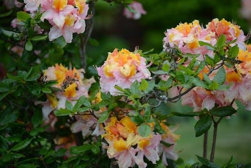 Free stock photo of beautiful flower, yellow