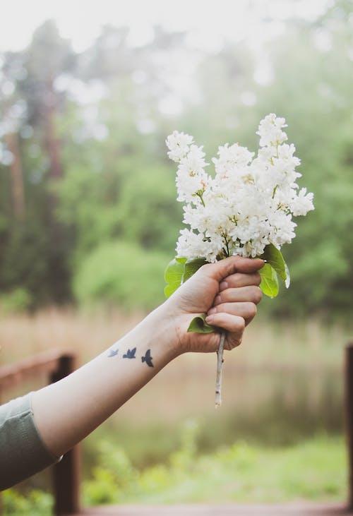 Безкоштовне стокове фото на тему «квіти, квітка, макрофотографія, флора»