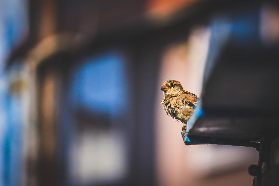 Selective Focus Photo of Perched Small Bird